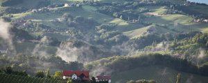 Sauvignon blanc-Welt trifft sich in der Steiermark