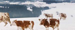 Milch: Marktsignale wurden erkannt