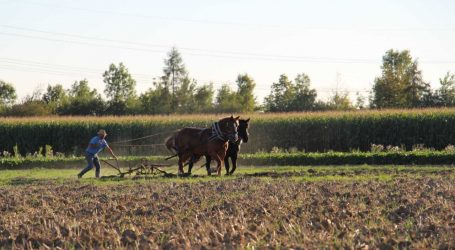 Arbeitspferde gewinnen an Bedeutung