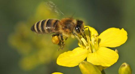 Neonics schaden doch den Bienen
