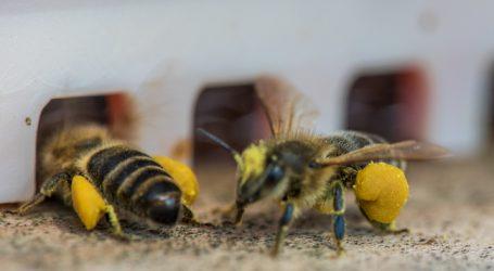 Lagerhäuser vermieten Bienen an Hobbyimker