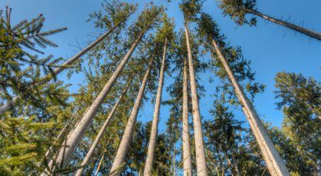 """Internetplattform soll Wald """"klimafit"""" machen"""