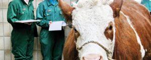 """""""Viehschauen brauchen neue Richtlinien"""""""