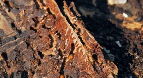 Borkenkäfer verursachte Rekordschäden