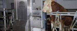 Greenpeace fordert: Milch- und Fleischproduktion halbieren