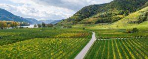 Österreichs Weinexport im Höhenflug