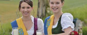 Niederösterreich sucht neue Milchhoheiten