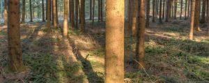"""Film klärt zum """"Wald im Klimawandel"""" auf"""