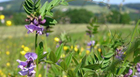 Bienenzentrum sucht Landwirte für Blühstreifenaktion