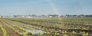 Landwirte sollen mit Abwasser bewässern