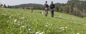 Strukturwandel bei Milchbauern setzt sich fort