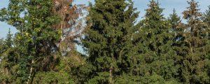Schadholzanteil in Oberösterreich verdoppelt