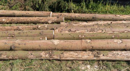 """Borkenkäfer: """"Keine gesunden Bäume fällen"""""""