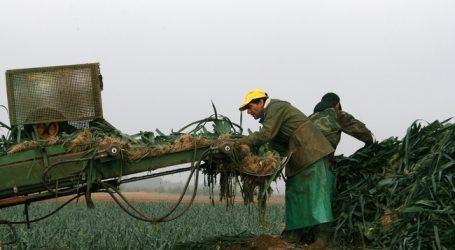 Tiroler Bauern gehen Saisoniers aus