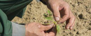 AMA-Flächenauswertung: Zuckerrübe auf Rekordtief