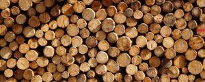 Trotz Borkenkäfer: Sägewerke importieren Billigholz