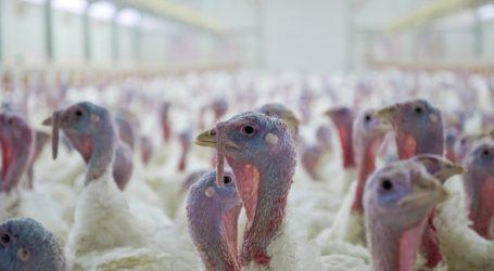 Osteuropäer unterlaufen heimische Geflügelpreise
