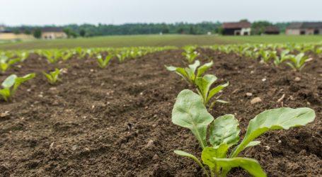 Agrana glaubt an die Zukunft des Rübenbaus
