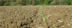 Pernkopf erwirkt Notfallregelung für Rübenbauern