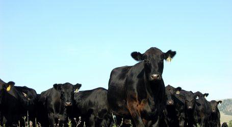 Mercosur: Uruguay will mehr Rindfleisch liefern