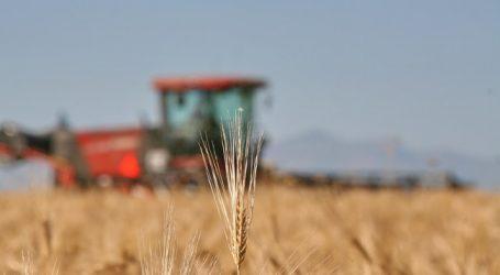 Bio Austria gibt Richtpreise für Futtergetreide heraus