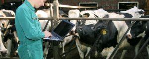 Projekt D4Dairy soll Digitalisierung vorantreiben