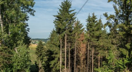 Wegen Käfer: Zu viel Nadelholz am Markt