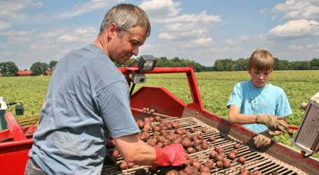 Frühkartoffel-Saison hat begonnen