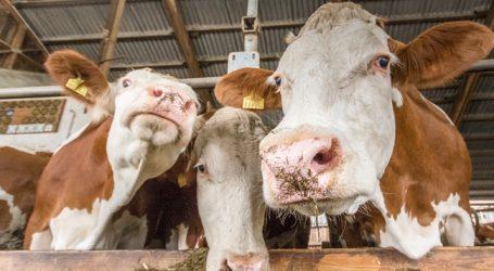 Milchwirtschaft steigerte Exportzahlen