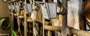 Nachfrage nach Milch soll massiv steigen