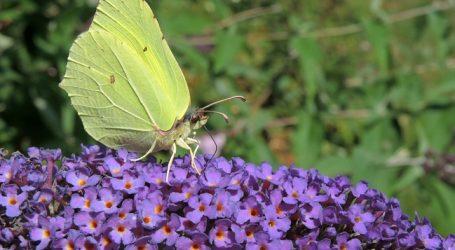 """""""Bauern nicht am Schmetterlingsschwund schuld"""""""