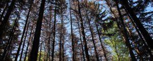 Köstinger schnürt Forstpaket für Borkenkäferschäden