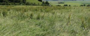 Steiermark: Bauern können Futter nicht einbringen