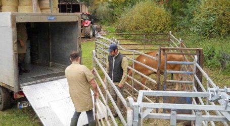 Pilotprojekt zur mobilen Schlachtung startet