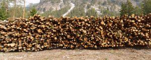 Kalamitäten bestimmen den Holzmarkt