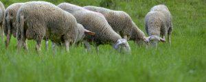 Brexit mit massiven Auswirkungen für Farmer
