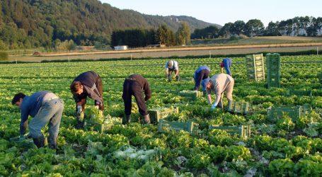 LK zu Ausbeutungsvorwürfen: Bauern werden verunglimpft