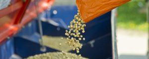 Saatgut Austria: Neue Züchtungsmethoden keine Gentechnik