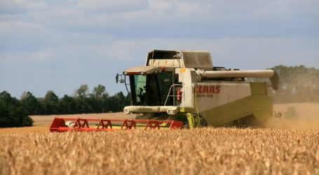 Deutsche Getreideernte: Früh und mit Ertragseinbußen
