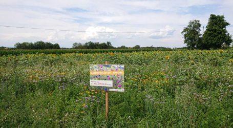 300 Kilometer Blühstreifen ernähren Bienen