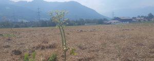 Vorarlberg prüft Dürre-Unterstützung