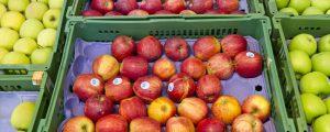 Apfellager in Österreich sind geräumt