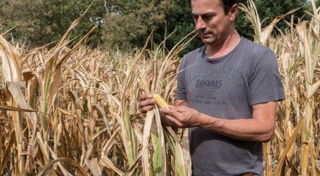 Dürre: Ausgleichszahlungen schon im Oktober möglich