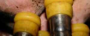 Gentechnikfreie Milch in Deutschland am Vormarsch
