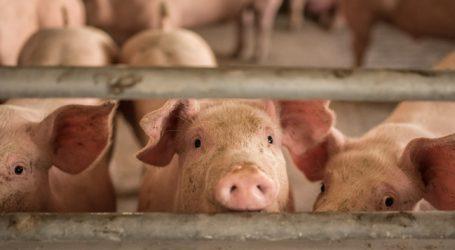 Mastschweinenotierungen legen zu