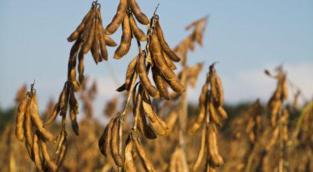 Sojaeinfuhren aus den USA verdreifacht