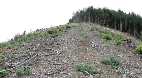 500.000 Festmeter Borkenkäferholz alleine in Oberösterreich