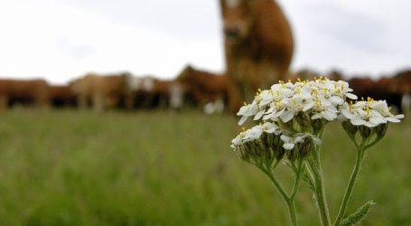EU will USA Rindfleischkontingent zugestehen