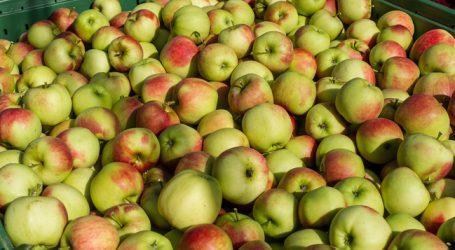 Größte Apfelernte Vorarlbergs seit zehn Jahren