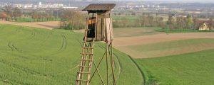 Wölfe: Niederösterreich ändert Jagdgesetz
